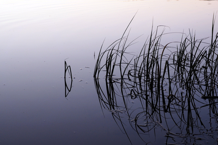 Wild calm nature of the North for recreation and fishing.
