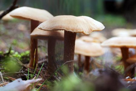 Autumn mushroom season.
