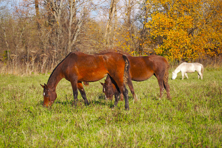 A herd of wild unattended horses grazing on a summer meadow. 写真素材 - 119869278