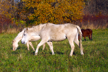 A herd of wild unattended horses grazing on a summer meadow. 写真素材 - 119869279