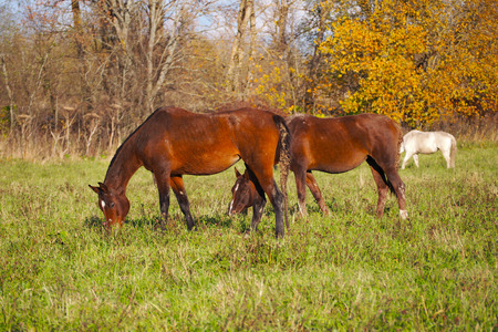 A herd of wild unattended horses grazing on a summer meadow. 写真素材 - 119871062