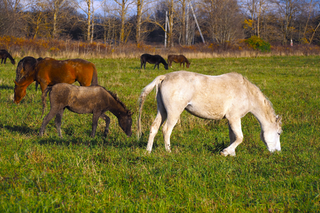 A herd of wild unattended horses grazing on a summer meadow. 写真素材