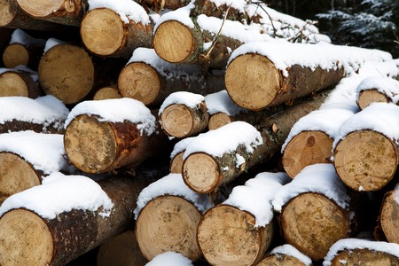 Stacks of sawn woods. Industrial logging of pine trees. Nature is used by people.