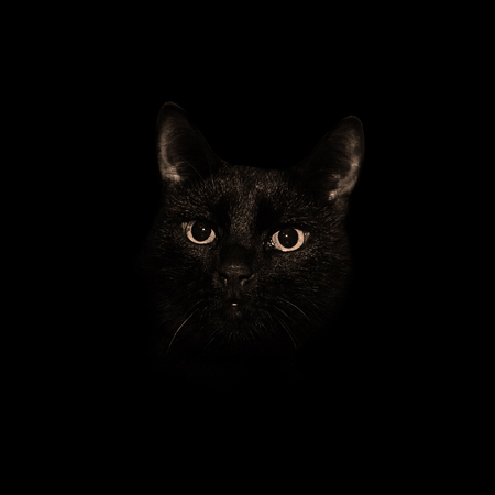 Head of the demonic black cat in a dark room. The mystical gaze of the feline.