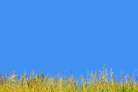 Green grass on background blue sky. Grass and sky. Summer panorama of wild nature. A large sky on a summer day. Reklamní fotografie