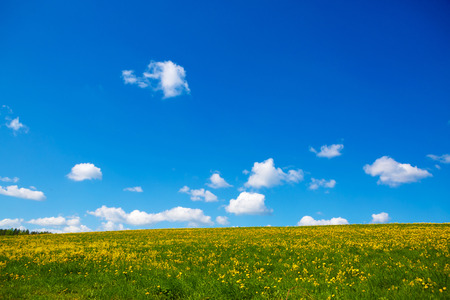Field with yellow dandelions to the horizon. Pastoral panorama of nature summer. Beautiful landscape of a Sunny day.