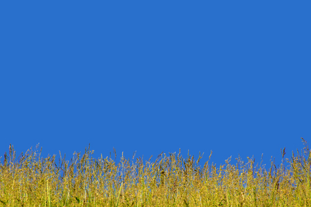 Green grass on background blue sky. Grass and sky. Summer panorama of wild nature. A large sky on a summer day. 写真素材