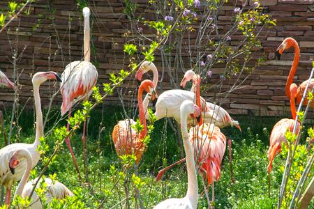 Flamingo in nature of park