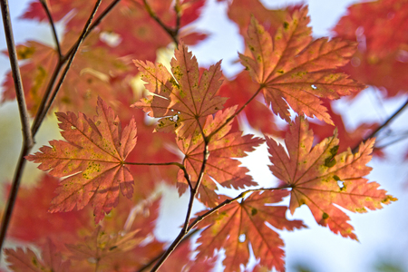 Seasons leave on the tree in the forest.