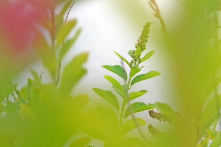 Nature Greens in the summer. 写真素材