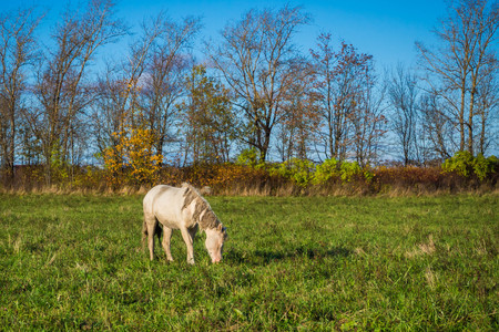 Family horses-Mare and foal.