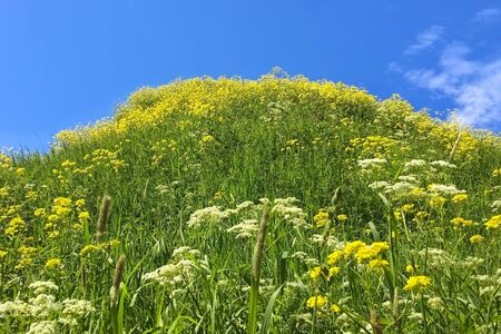 View of wild hilly summer nature with flowers in the grass against the sky.