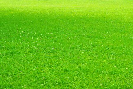 Green texture of grassy lawn. Zdjęcie Seryjne