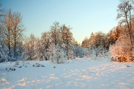 Winter in the wild North. 写真素材
