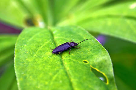 Beetle on a green leaf. 写真素材