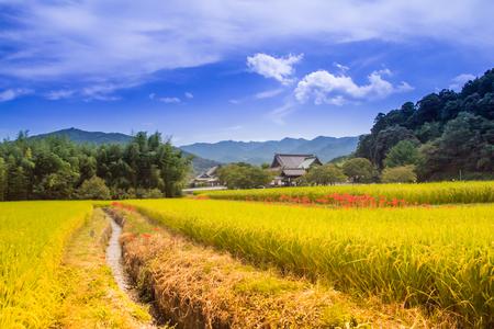 gradas: Las terrazas de arroz de Asuka.
