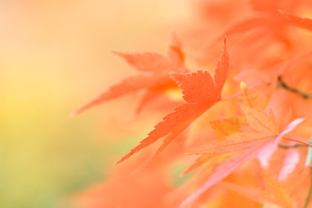 Autumn leaves Reklamní fotografie