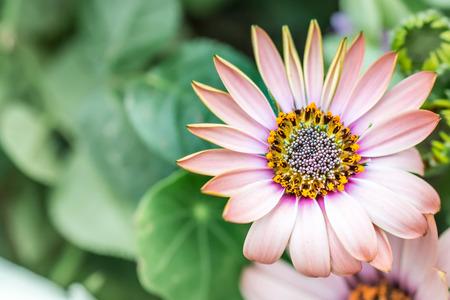 photos of pattern: Daisy