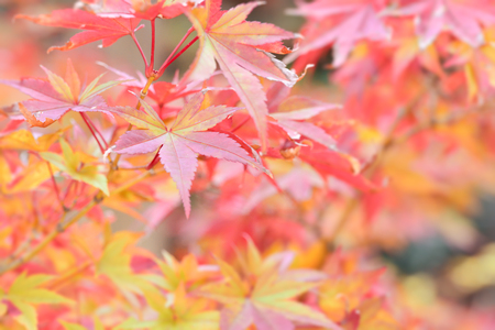 bright light: Autumn leaves