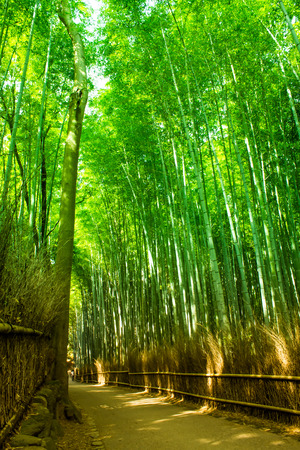frontiers: Bamboo forest