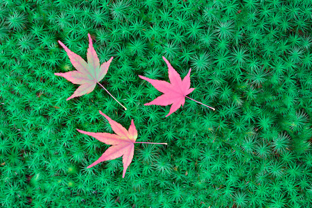 green background: Autumn leaves on the green vivid moss