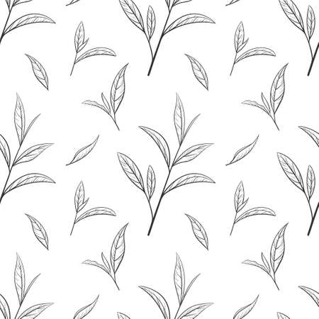 Hand drawn green tea leaf, tips, flush. Sketch Organic food and drink. Vector illustration, seamless pattern black elements on a white background. For printing and design