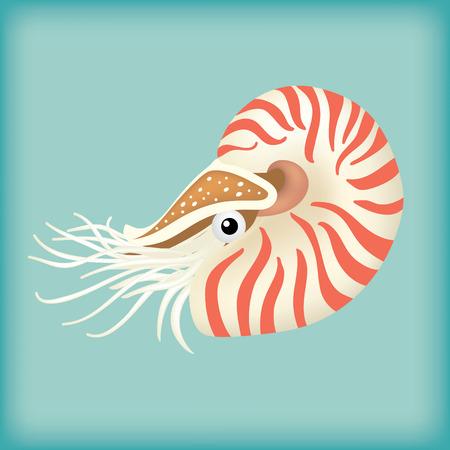 mollusca: isolated nautilus Illustration