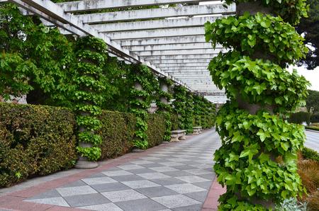 columns and ivy walk way in the Retiro park, Madrid