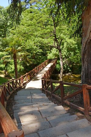 wooden bridge, way to the wood