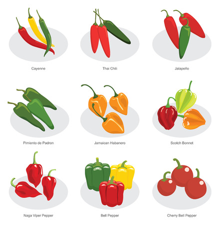 collection of chili pepper in vector Illustration