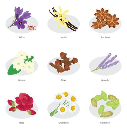 collection of flower herbs, saffron, vanilla, star anise, jasmine, clove, lavender, rose, chamomile, cardamom Illustration