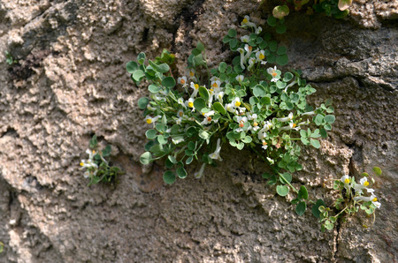 small flower grows on wall