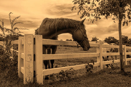 horse on farm in retro style photo