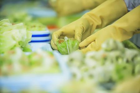 食品工場での労働者。 写真素材