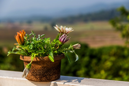 a pot of flowers on the balcony balustrade with a beautiful view of the mountain on a sunny day Stock Photo