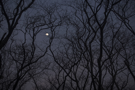 treeline: The silhouette of a leafless treeline in the night time. Stock Photo
