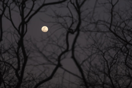 treeline: A nearly-full moon at night over the silhouette of a leafless treeline. Stock Photo