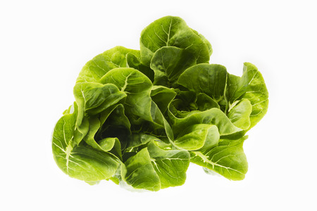 butter head: fresh butter head lettuce isolated on white background