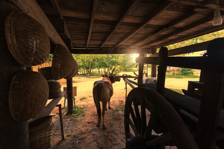 wagon: cows and wagon showed the living of Thai antiquity Stock Photo