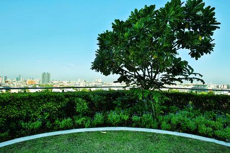 Roof top garden with plants and tree Standard-Bild