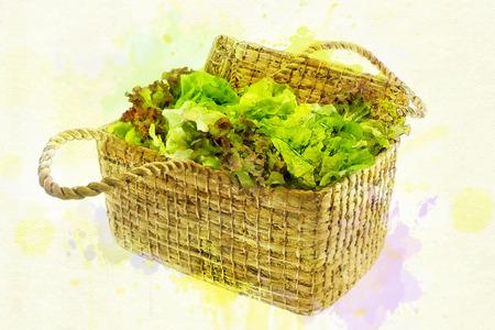Digital painting Fresh green organic lettuce in a basket Standard-Bild