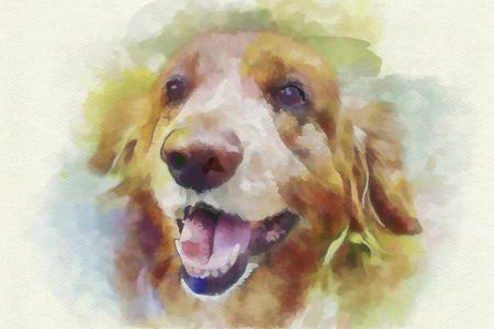 golden retriever: digital painting dog portrait Golden Retriever