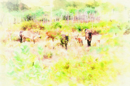 Digital painting  Cattle  in the countryside.