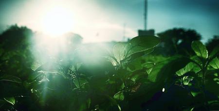 The sun shines through the bushes. Stock Photo