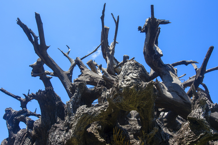 Old stump with blue sky Stock Photo