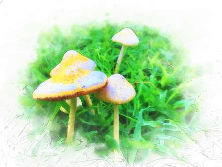 Digital painting , Illustration Mushrooms on lawns