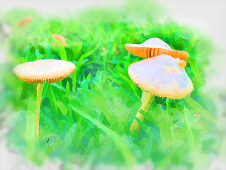Digital painting , Illustration  Mushrooms on lawns Standard-Bild