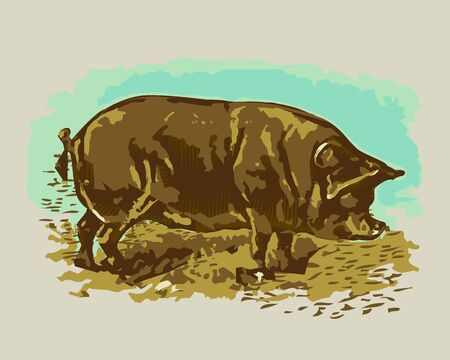 Vector - Illustration of Agricultural pig , woodcut style
