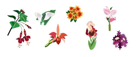 vector illustration Set of graphic flowers