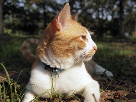 lies down: Orange cat lies down in the garden